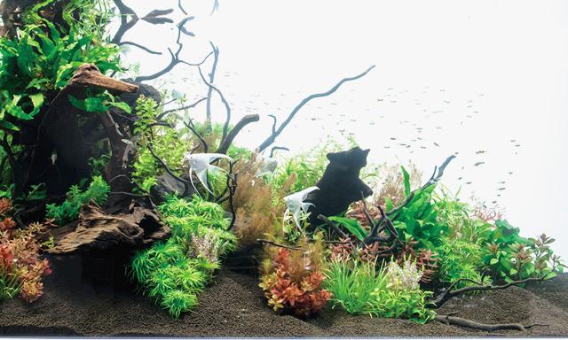 熱帯魚や金魚の水槽
